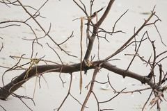 Dead tree branch. Dead Tree on beach Royalty Free Stock Photography