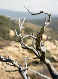 Dead Tree Branch Detail Royalty Free Stock Images