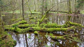 Dead tree branch lying in water. Moss wrapped Stock Photos
