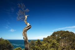 Dead tree branch with ocean background Stock Photos