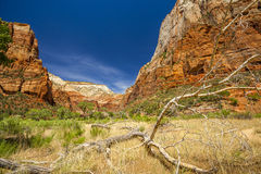 Dead tree branch in Zion National Park Stock Photo