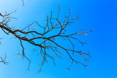 Dead tree branches against blue sky Royalty Free Stock Photography