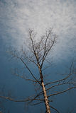 Dead tree branches against blue sky Stock Photo