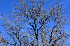 Dead Tree Branches Against A Bright Blue Sky Stock Photo