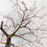 Dead tree. Branches with dusky sky Royalty Free Stock Photo