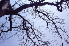Dead tree branches Royalty Free Stock Image