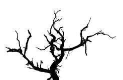 Dead tree branches isolated. Stock Photo