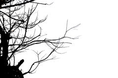 Dead tree branches isolated. Stock Photography
