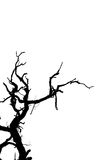 Dead tree branches isolated. Stock Photos