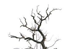 Dead tree branches stock photos image 3413063 for Comment entretenir un citronnier