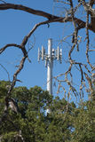 Dead tree branches live trees and a cell tower Stock Image