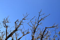 Dead tree with branches Stock Photo
