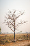 Dead tree branches plains. Stock Image