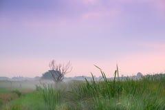 Dead tree bush outback scene. In fog Royalty Free Stock Photos
