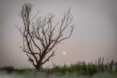 Dead tree bush outback scene. In fog with sunrise Stock Photo