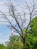 Dead dry tree and chimneys stock images