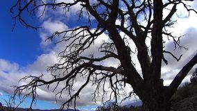Dead Tree and Clouds Flying. Palm Desert California USA ©2015 J.S.Edmondson Xcorps TV stock video footage