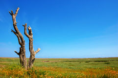 Dead Tree on a Coastal Salt Marsh. With a pebble ridge beyond royalty free stock images
