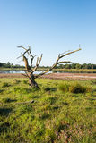 Dead tree in a colorful landscape Stock Photo