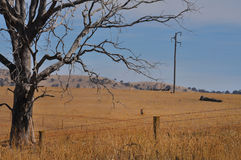 Dead tree and country power line. In arolling paddock of dry grass, symbolising the potential impact of energy use on global warming and the effect on farmland Royalty Free Stock Photo