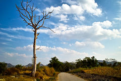 Dead tree in countryside. Scenic view of lone dead tree in countryside under blue sky and cloudscape Stock Photo