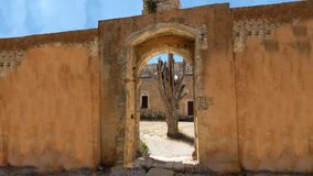 Dead tree. A dead tree in the courtyard of Arkadi monastery on the Greek island of Crete stock footage