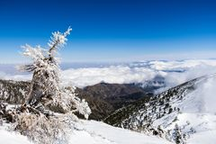 Dead tree covered in ice high on the mountain; white clouds in the background covering the valley, Mount San Antonio (Mt Baldy),. Los Angeles county, California stock photos