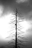 Dead tree with a crow. In black and white royalty free stock photos