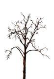 Dead tree Royalty Free Stock Image