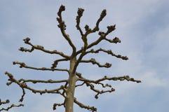Dead tree in Düsseldorf Stock Image