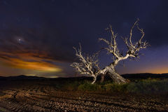Dead tree. Daed tree in the night Royalty Free Stock Photo