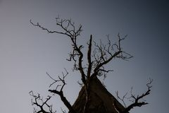 dead tree on dark background,tree without leaf on dark background royalty free stock image