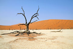 Dead tree in dead vlei Stock Image
