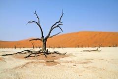 Dead tree in dead vlei Stock Image