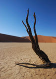Dead Tree in Deadvlei Royalty Free Stock Image