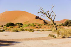 Dead tree, Deadvlei Namib Royalty Free Stock Photography