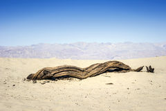 Dead tree in Death Valley - landscape. Dead tree in Death Valley - landscape, California, USA Royalty Free Stock Photography
