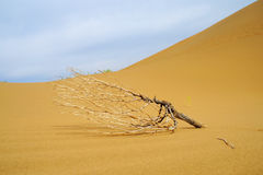 Dead tree in desert. To see a world in a grain of sand, And a heaven in a wild flower Stock Images