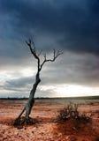 Dead Tree Desert. Dead tree in the desolate desert Stock Photos
