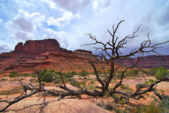 Dead tree in desert. With mountain and dramatic cloud background Stock Photo