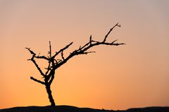 Dead tree in desert Royalty Free Stock Images