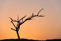 Dead tree in desert Royalty Free Stock Images