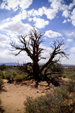 Dead tree in desert. A view of the remains of a dead tree in the middle of a flat sun drenched desert area in Moab, Utah (USA Royalty Free Stock Photos