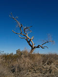 Dead Tree in a Desert stock photography
