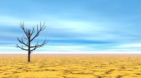 Dead tree in desert Stock Images