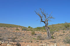 A Dead Tree On The edge Of The Desert Stock Photo