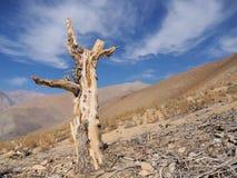 Dead tree in desert-like mountain scenery stock image