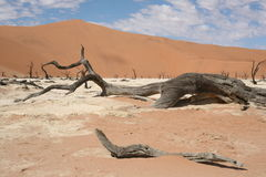 Dead tree in desert. A dead tree in the desert, with mountain of sand behind Stock Photography