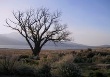 Dead Tree in Desert Near Lake stock photo