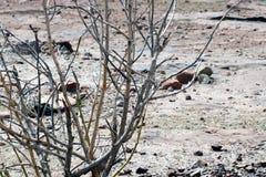 Dead tree in desert summer stock photo